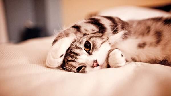 wallpaper-cute-cat-02