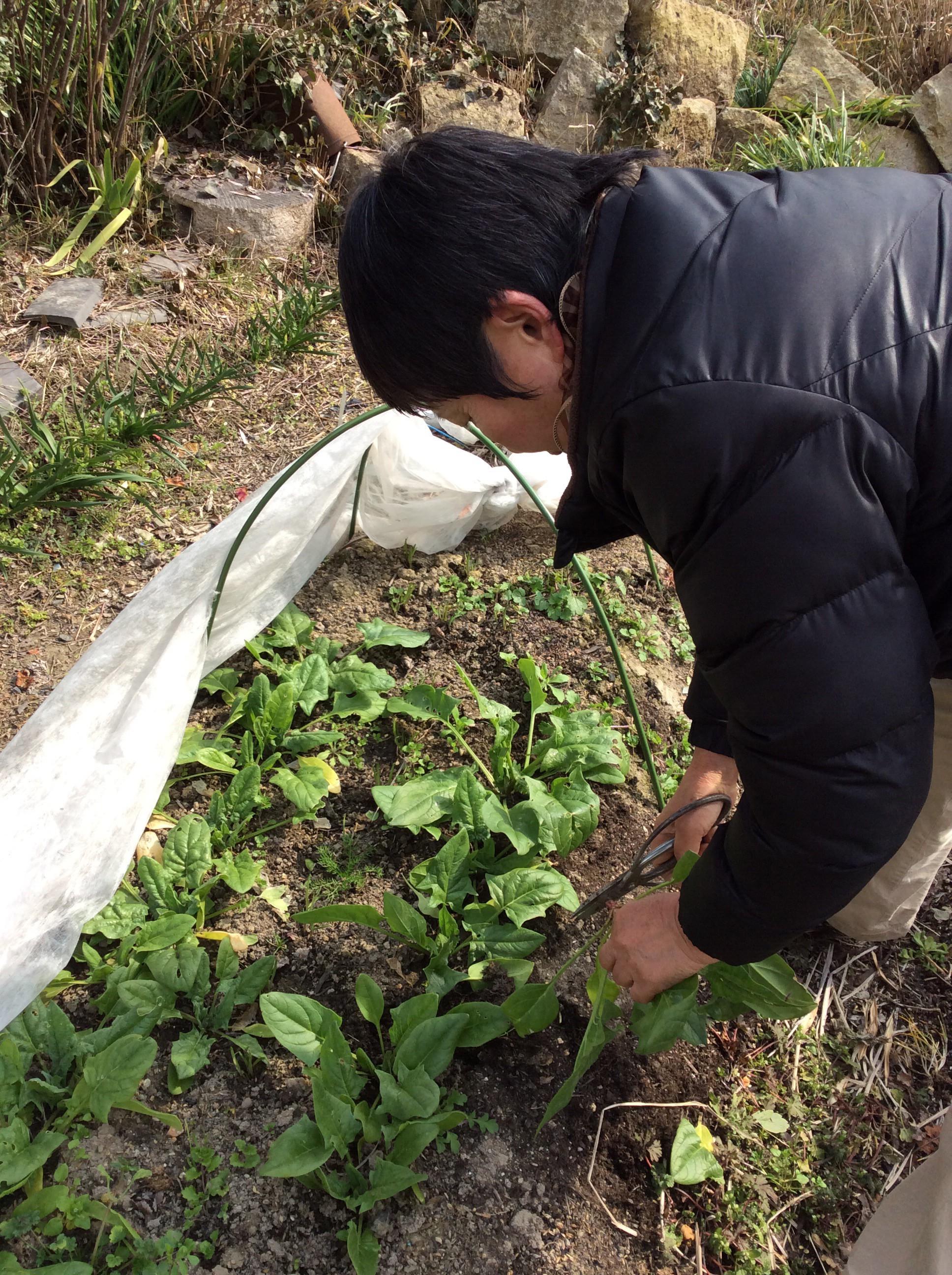 てるバアちゃんの「無農薬野菜をめざす」を紹介します