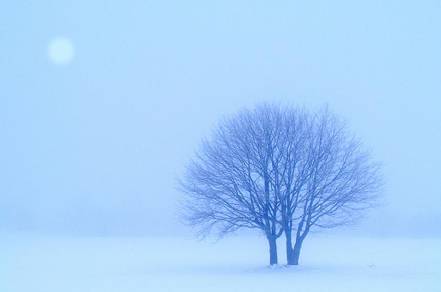ホームページに雪を降らしてみましょう/WordpressプラグインJetpack