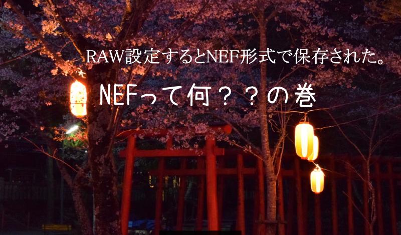 NikonD5300でRAW設定するとNEF形式で保存されて戸惑う記録