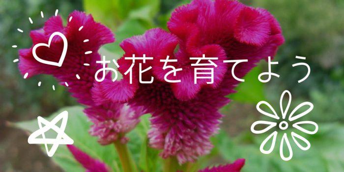 お花を育てよう/ご先祖様に手向けるお花